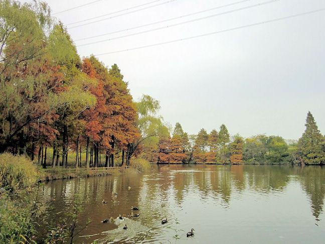 20101113nagareyama-kashiwa04.jpg